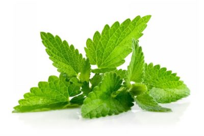 Pure Essential Oil of Spearmint