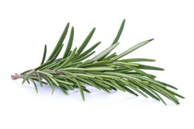 Pure Essential Oil of Rosemary