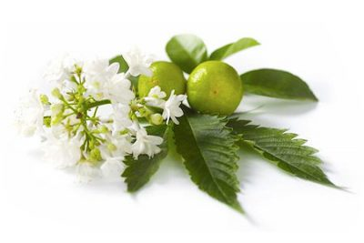 Pure Essential Oil of Patchouli