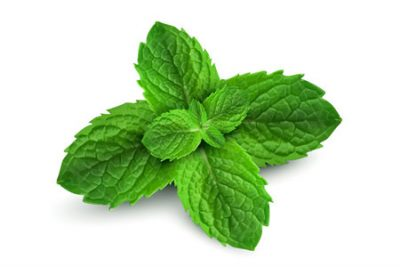 Pure Essential Oil of Peppermint
