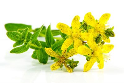 Pure Essential Oil of St John's Wort