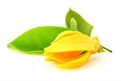 Pure Essential Oil of Ylang-ylang